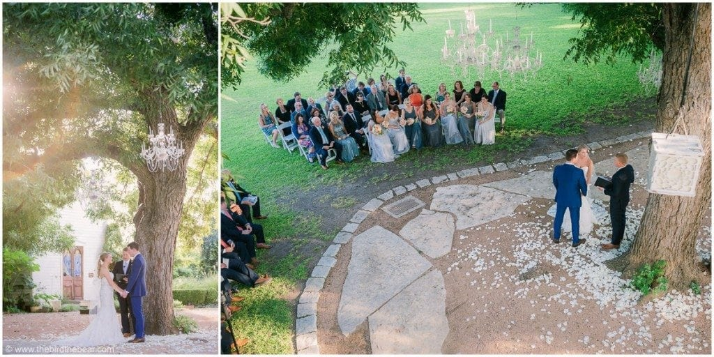 Bride and Groom hold hands in front of huge tree